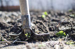 Picture of shovel in garden.